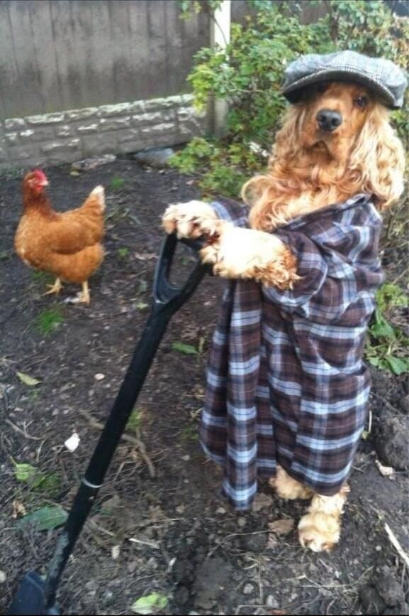 This dog who is also a farmer. | funnies and cuties! | Pinterest | Funny animals, Dogs and Cute animals