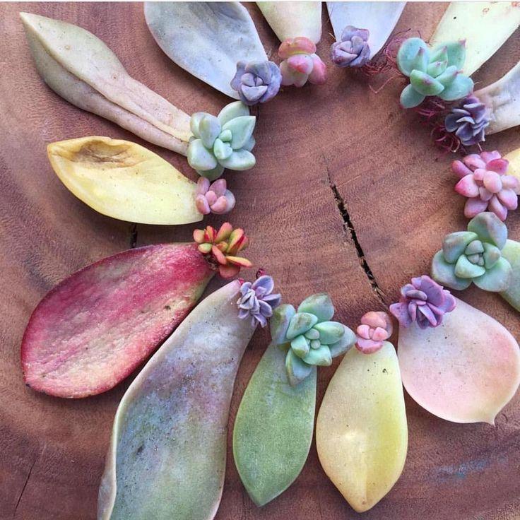 "10 mil Me gusta, 90 comentarios - We Ship Succulents  (@fairyblooms) en Instagram: ""☀️ Grow """