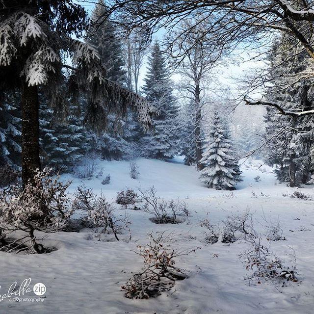 """О, это сказочное место, где-то далеко на вершине горы. Мы забрели туда на снегоходах, пока остальные катались на горных лыжах. Нетронутый лес обступил нас со всех сторон. Было немного жутковато, но и... хотелось пробраться еще глубже...к самому """"хранителю"""" леса. Казалось, что это уже совсем близко...но время летело неумолимо... пришлось спешно возвращаться в реальность…"""