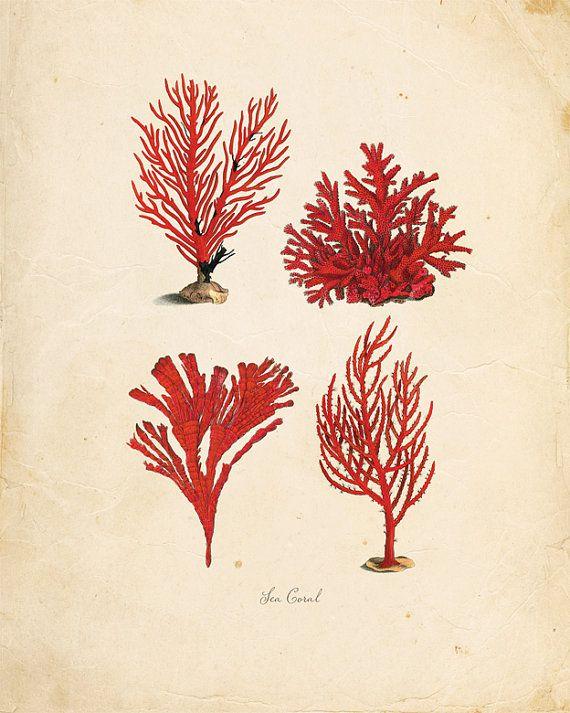 Vintage Sea Coral on Antique Ephemera Print 8x10 P103
