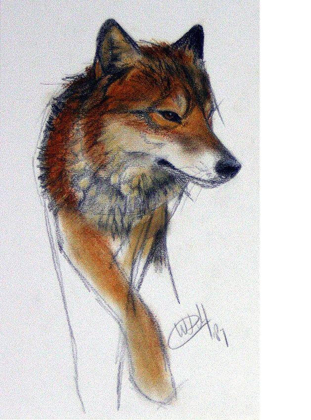 Walty Dudok van Heel - wolf