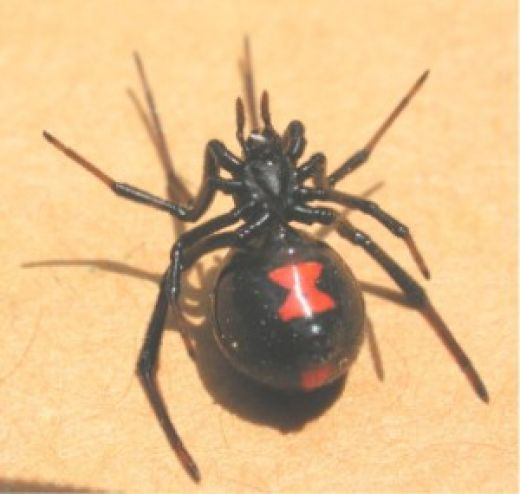 A Great Way To Rid Your Yard Of Spiders    Place a whole package of chewing tobacco in one gallon of boiling water , remove from heat and allow to cool. Strain the solution into a container and put 1 cup of the solution and 1/2 cup of lemon scented dish-washing soap into a hose end sprayer. Spray around your house and yard and the spiders will be gone for quite a while. Never spray on roses though as it will turn them black.
