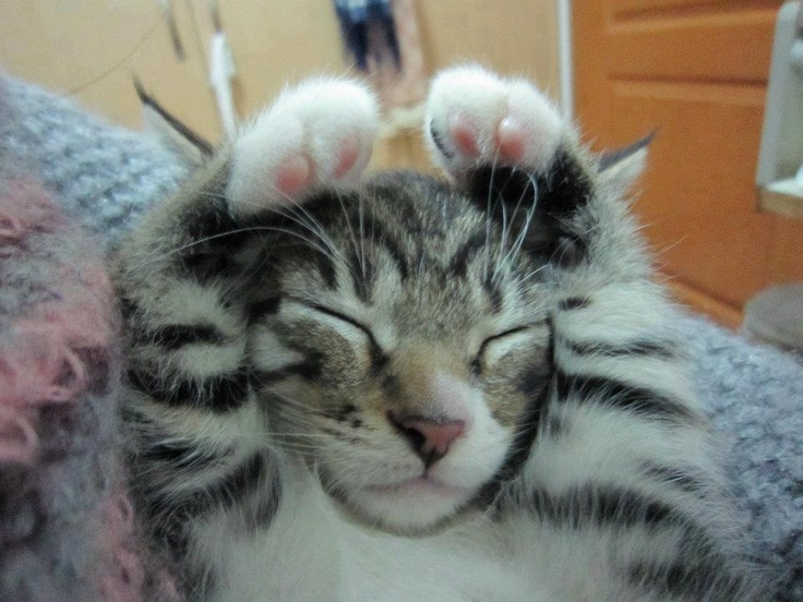 wake up, cutie   Animal Love