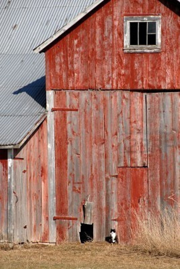 Love this photo of the old barn with the kitty.