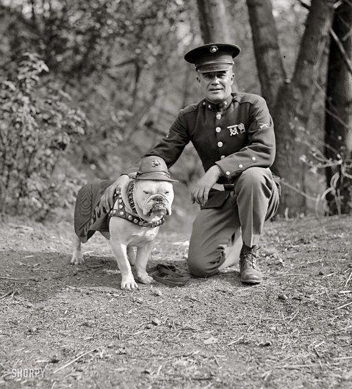 1925 - Sgt Jiggs. The Marine Corps mascot in Washington, D.C.