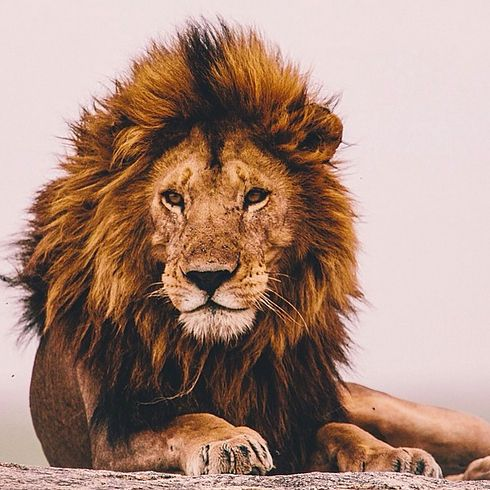 10 CREATIVE Lion Artworks created from rather surprising things ( ... including one item you can only get from a hotel ... ) // Click here to view: http://theendearingdesigner.com/amazing-lion-art-sculptures/♌