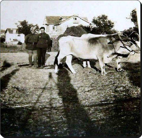 Pendik'te köy hayatı (1930'lar) #istanlook #nostalji #birzamanlar