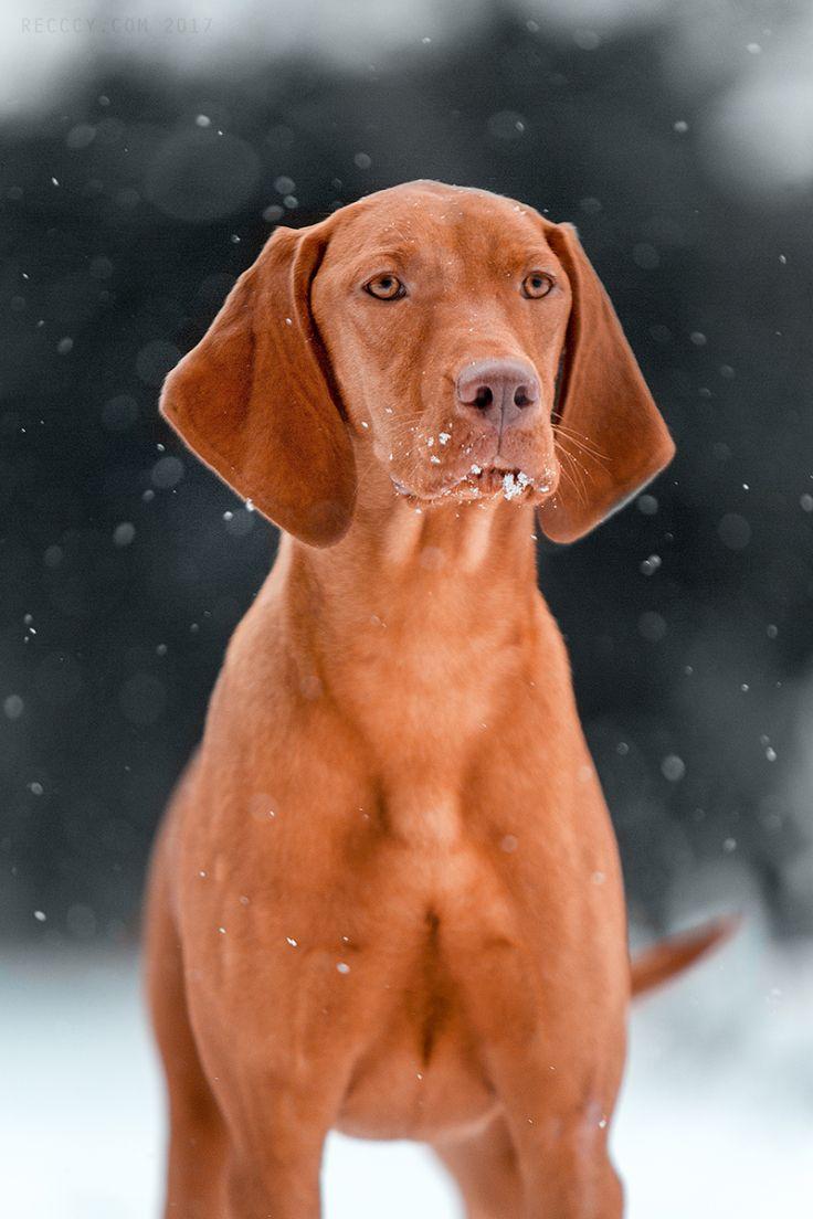 259 besten HUNTER\'S dogs Bilder auf Pinterest   Englische pointer ...