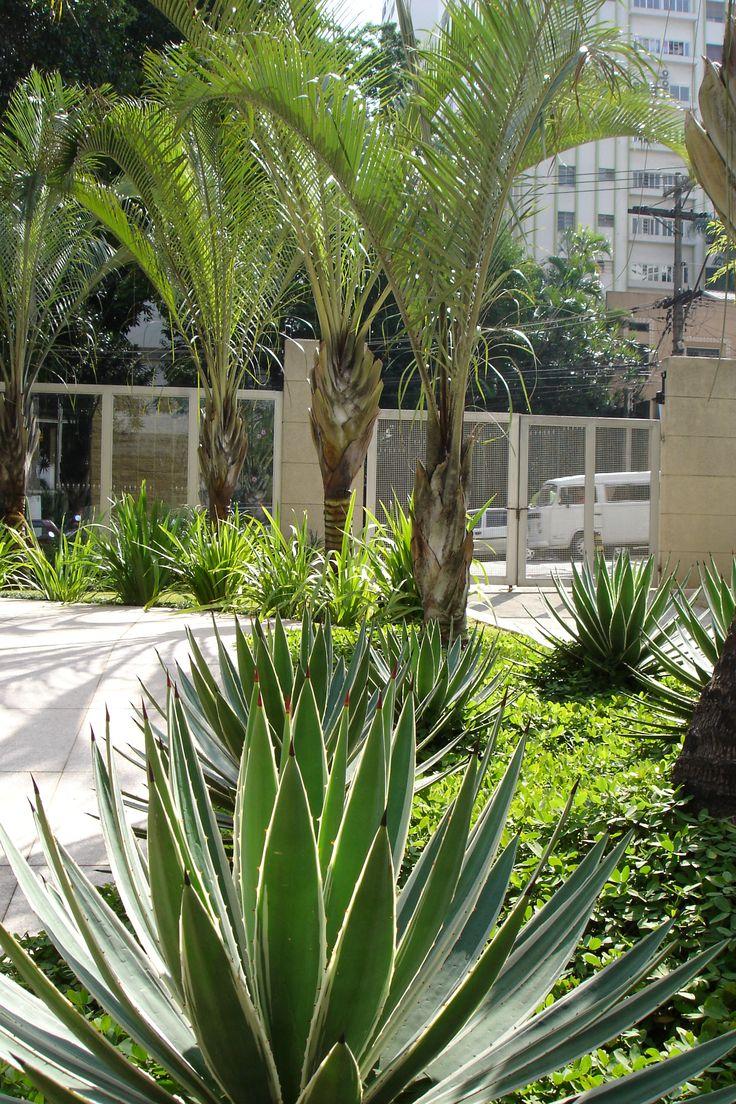 Composição de Agaves com Palmeira-triangular para um Edifício comercial.