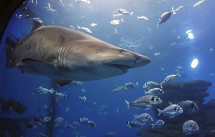 10 fun facts about sharks in the spirit of Shark Week! And, hey, sharks are fun to learn about all year long!
