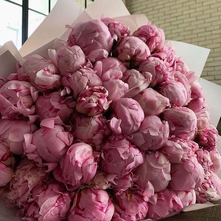 Piones Flowers, Luxury Flowers, Little Flowers, My Flower, Planting Flowers, Beautiful Flowers, Peony Flower, No Rain, Flower Aesthetic