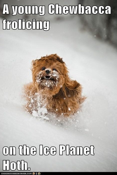 A young Chewbacca frolicing  on the Ice Planet Hoth.: Babies, Animals, Star Wars, Funny Stuff, Baby Pictures, Dog, Chewbacca S Baby, Starwars