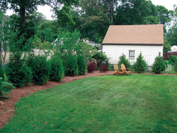 A Mixed Evergreen Tree Hedge For Privacy Screening Http