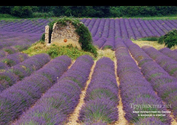 Лавандовые поля в Провансе: Где и как добраться? : Статьи