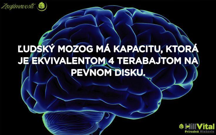 O mozgu sme už jednu zaujímavosť mali a bolo to impulzoch. No vedeli ste o kapacite mozgu? 😮🧠