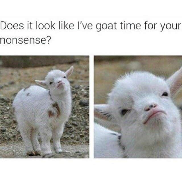 Roundup Of Cute Animal Memes Images 44 Memes Cute Animal Memes Funny Animals Funny Animal Memes