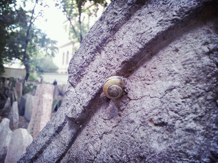 Snail on the gravestone