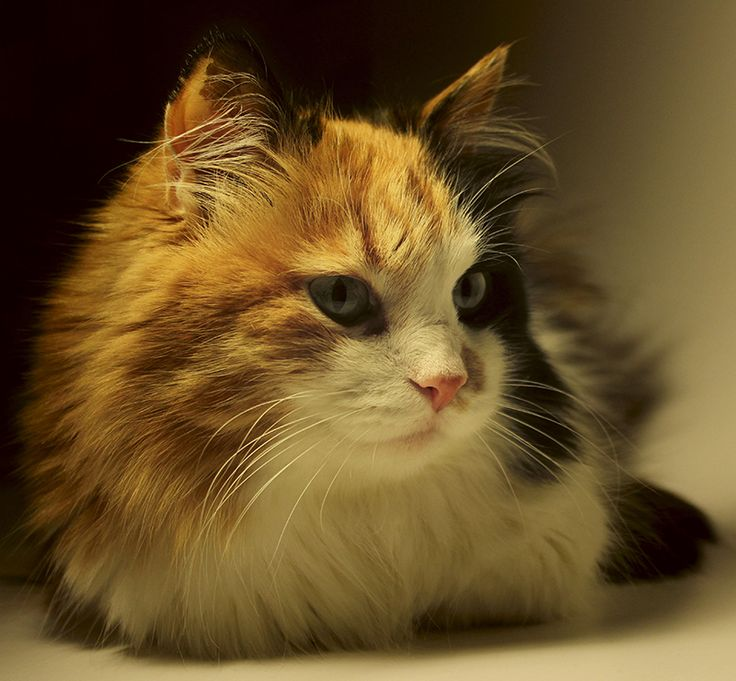 Funny Names For Calico Cats