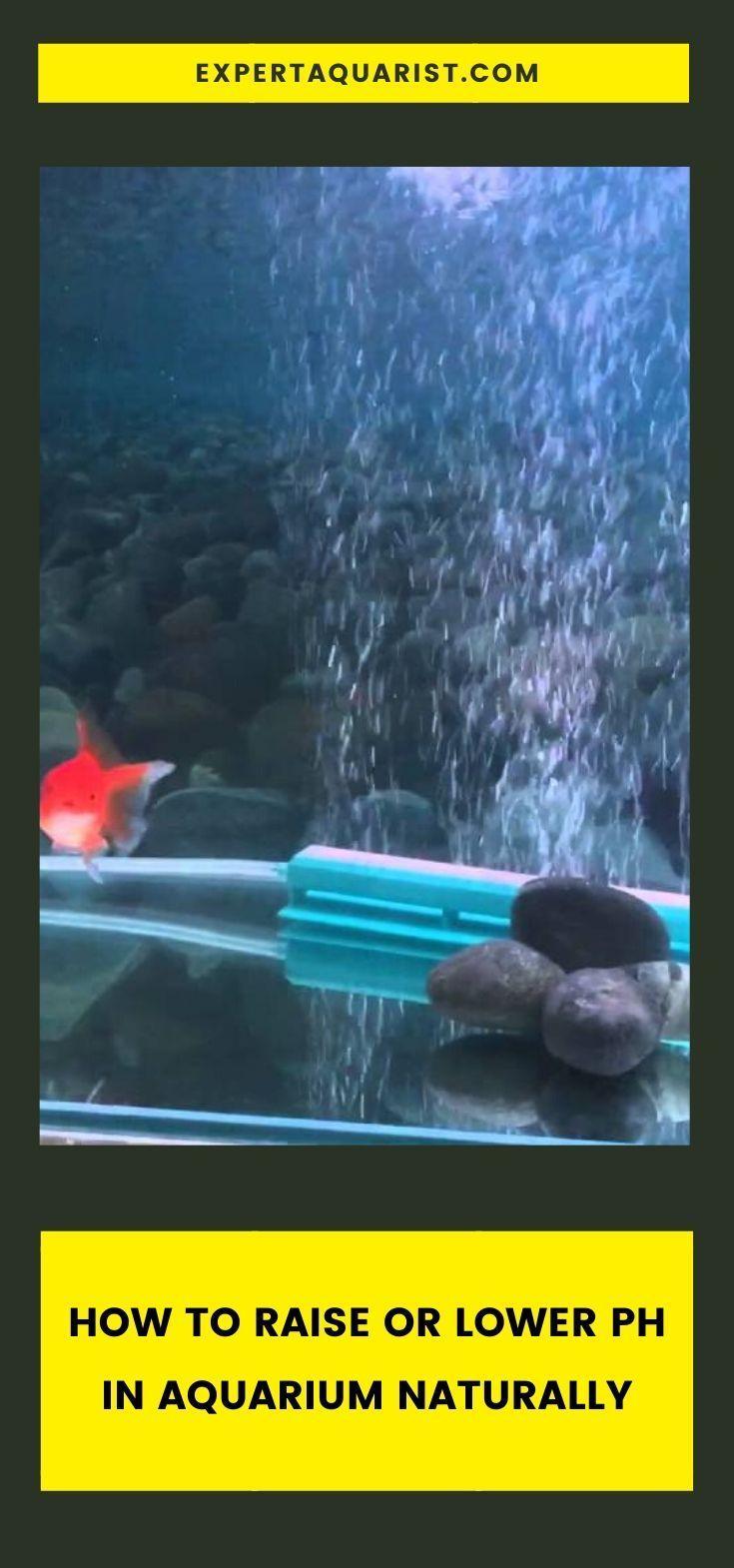 How To Raise Or Lower Ph In Aquarium Naturally Aquarium Aquarium Fish Nature