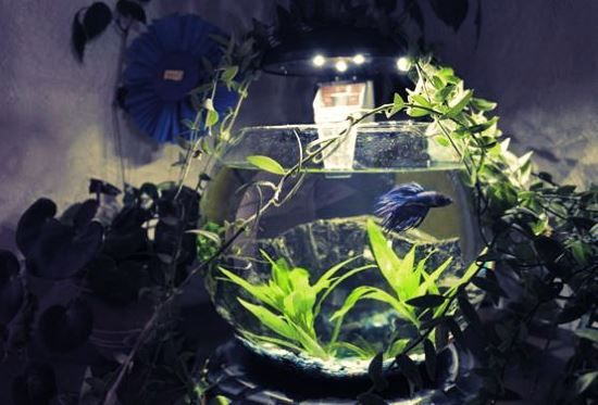 Купить круглый аквариум на заказ в Москве Подводный мир