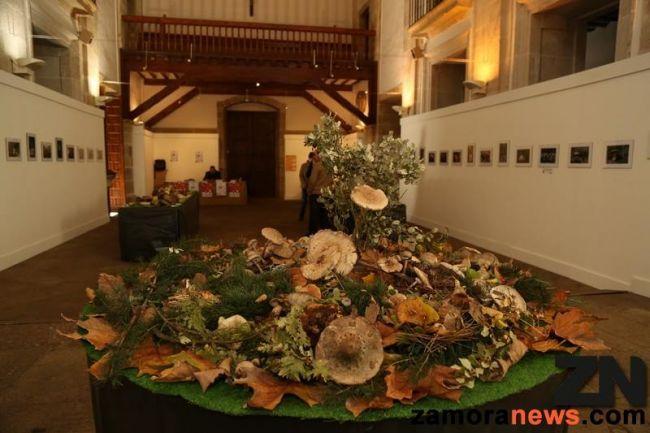 La Sala de Exposiciones de la Encarnación acoge una muestra de las variedades micológicas de la provincia de Zamora