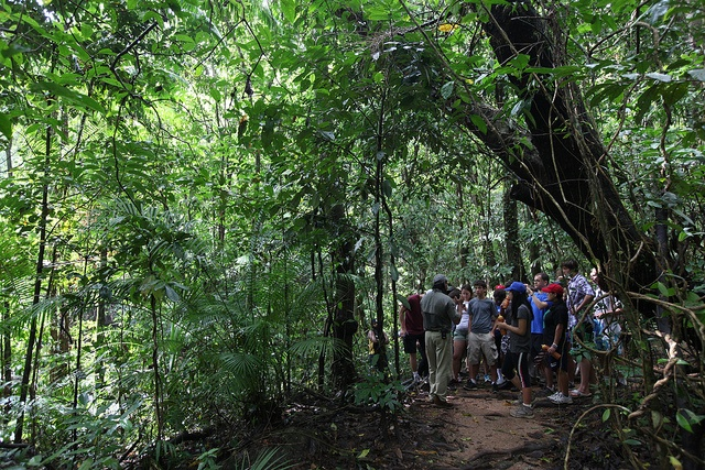 TGS students explore the Daintree rainforest© THINK Global School, 2011