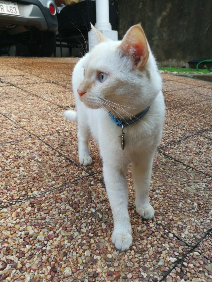 Pin de Belén Blanco Fleitas en cat