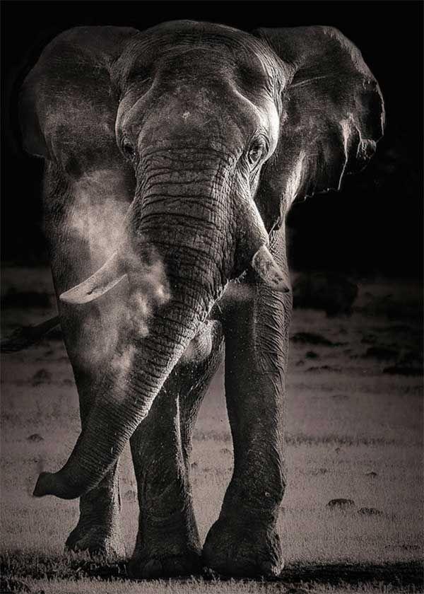 15 beautiful and majestic photos of elephants – Blog of Francesco Mugnai