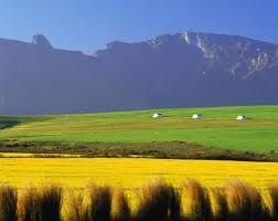 canola fields swellendam - Google Search