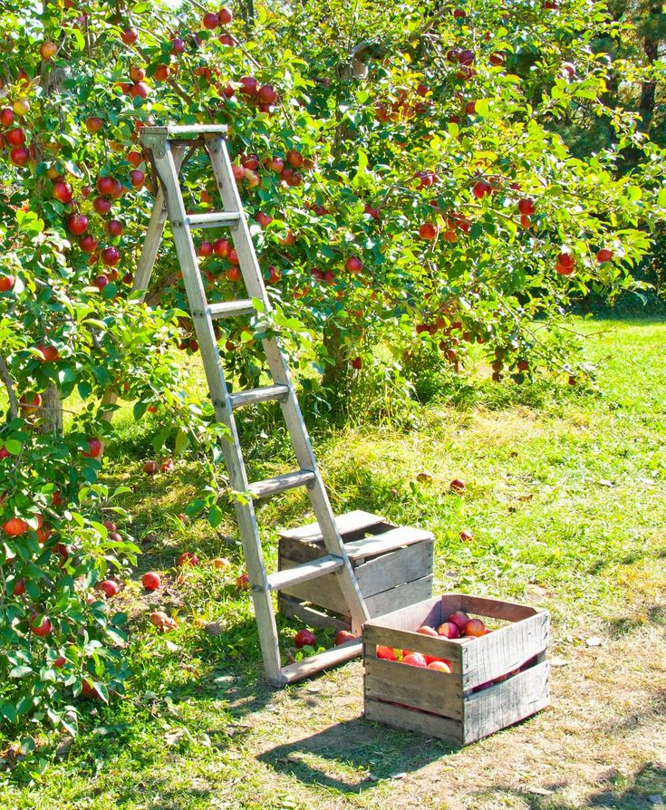 Healthy Sustainable Living: 5 Reasons to Grow Fruit Trees... even in Little Patio Pots. The freshest, safest and most economical fruit you'll ever provide for your family can be grown in your own backyard. And that is safe local food for sure!