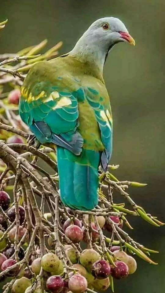 Pretty Birds, Beautiful Birds, Colorful Birds, Exotic Birds, Wildlife  Nature, Bird Watching, Bird Nests, Mother Nature, Beautiful Creatures