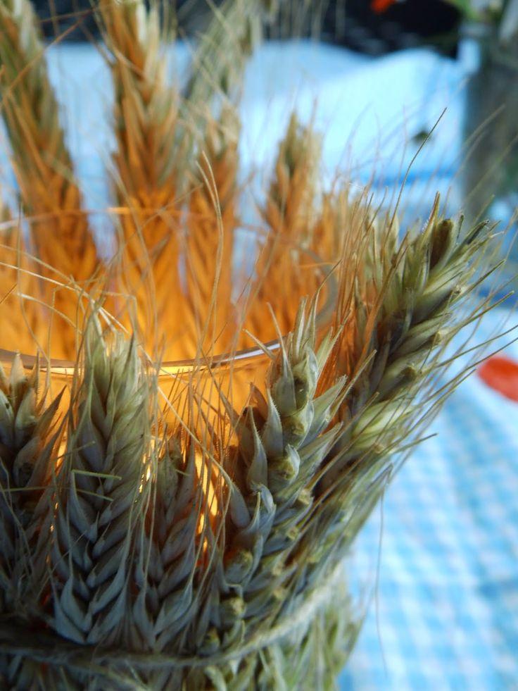 DIY Sommerlichter aus Getreide-- summer light made of wheat http://ernestka.blogspot.de/2014/07/fruhe-ernte-diy-sommerlichter-aus.html