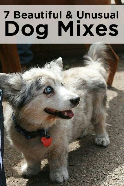 beautiful&unusual dog mixes | DOGS PART 1 | Pinterest