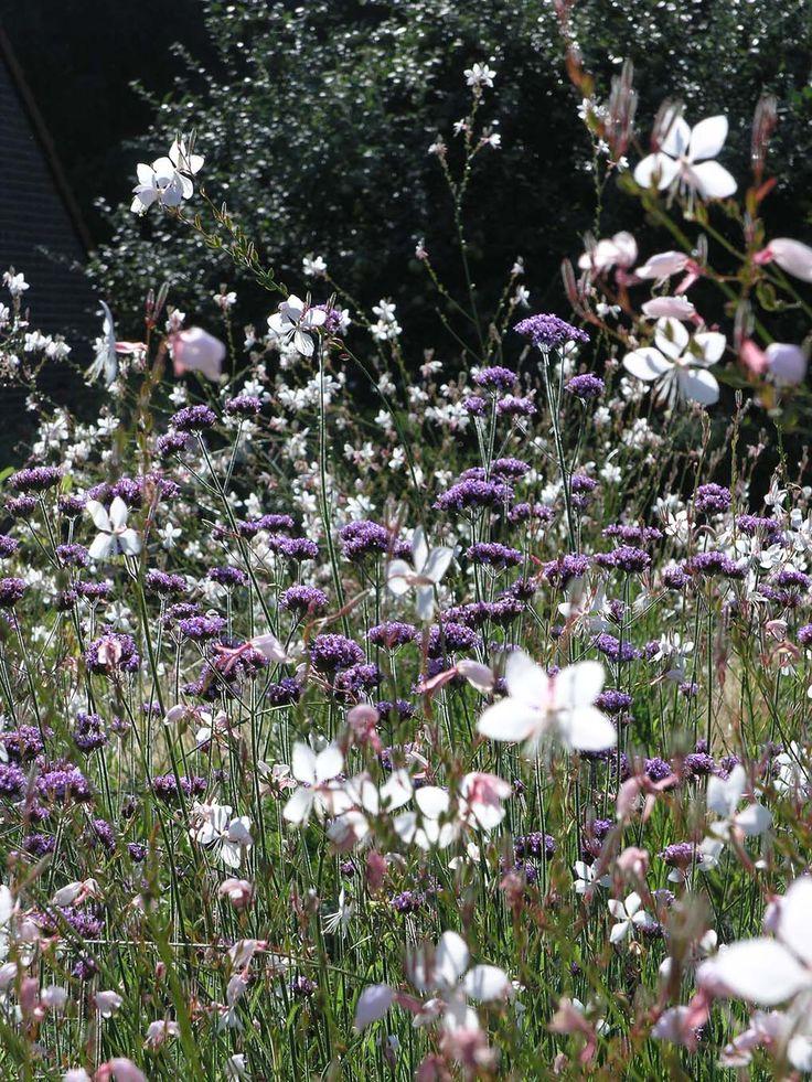 Een luchtige mix van Verbena bonariensis en Gaura lindheimerii Whurling Butterflies.