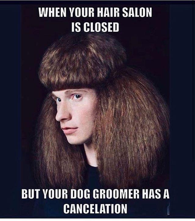 Keep Smiling Dontpanic Salon Woof Hairdo Groomer Peaceduringthepandemic In 2020 Hair Humor Jokes Pics Dog Groomers