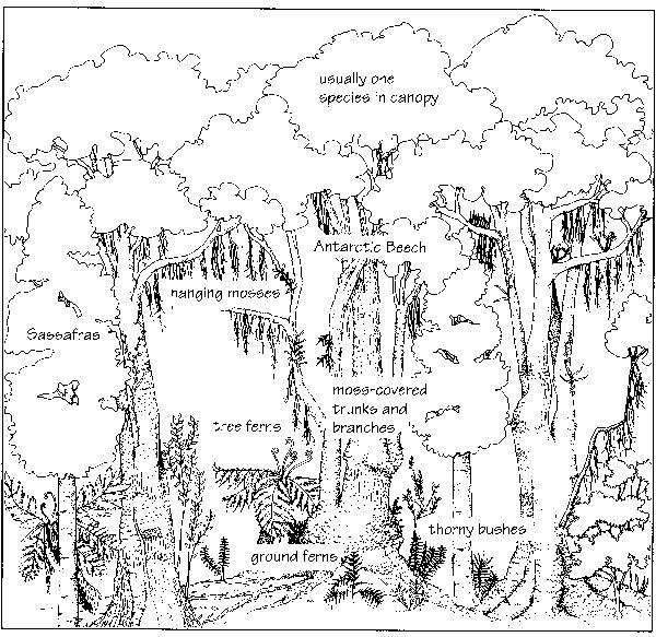 Biomes of the world coloring page google search for Temperate forest coloring pages