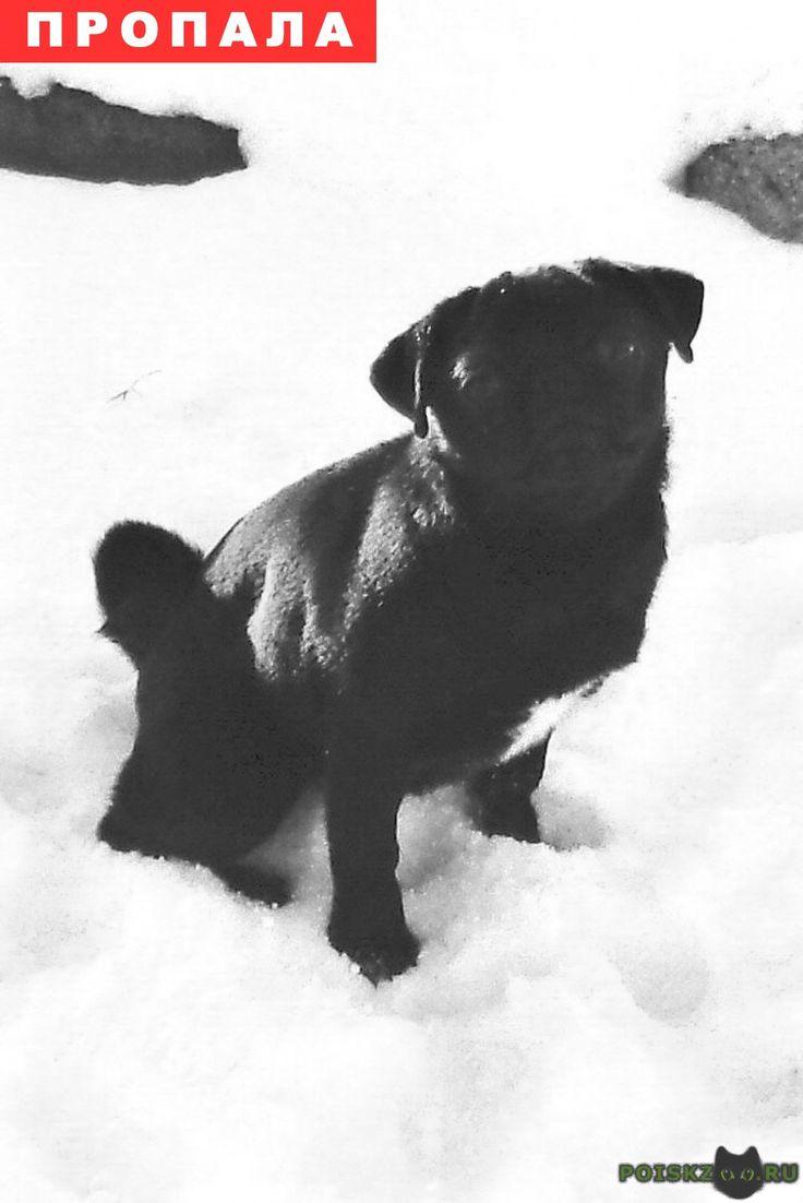 Пропала собака мопс г.Рыбинск http://poiskzoo.ru/board/read31542.html  POISKZOO.RU/31542 пропал мопс девочка черного окраса, на груди белый галстук, хвост сильно закручен, клеймо, ласковая, собака пропала сукотная, кто нашел просьба позвонить  РЕПОСТ! @POISKZOO2 #POISKZOO.RU #Пропала #собака #Пропала_собака #ПропалаСобака #Рыбинск
