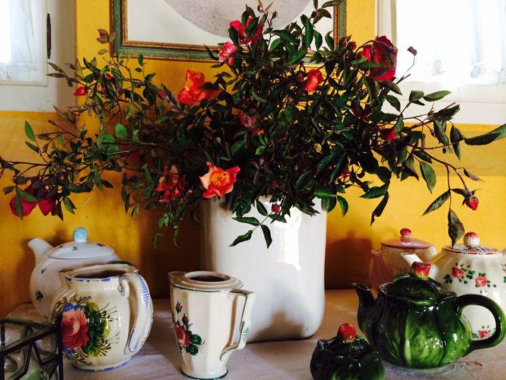 """Rose """"mutabilis"""" nel soggiorno, tra le teiere d'epoca"""