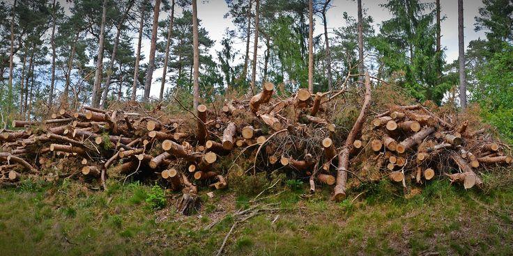 Biomasa como clave para que la Unión Europea alcance sus objetivos de energía renovables de cara a 2020