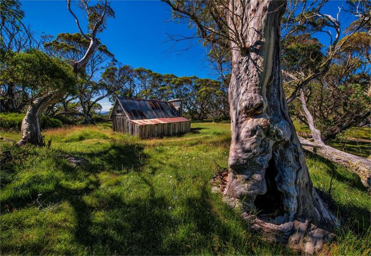 A summer view of Wallaces Hut in the Alpine region of north east Victoria, Australia. - Southern Lightscapes-Australia/Getty Images