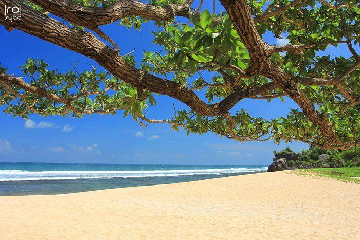 Pantai Pasir Putih,, Pantai Pok Tunggal, Gunungkidul DIY  Foto: Ro Syad