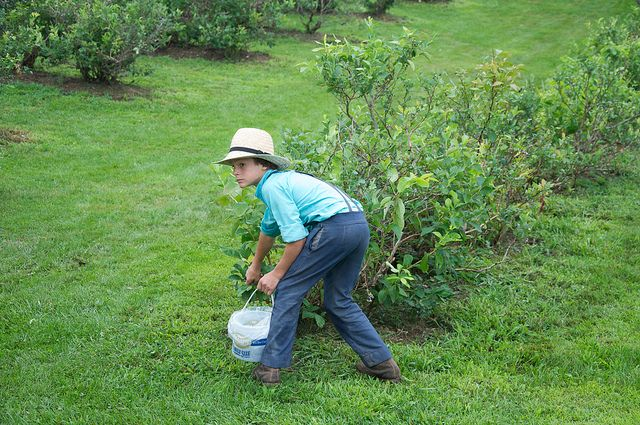 picking tomatoes is like fishing When you're doing something like hiking, fishing,  chiggers & no-see-ums summer's invisible pests  fishing, bird watching or berry picking.