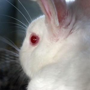 11 marzo 2013: una data da ricordare per tutti coloro che sono contrari alla sperimentazione cosmetica sugli animali.