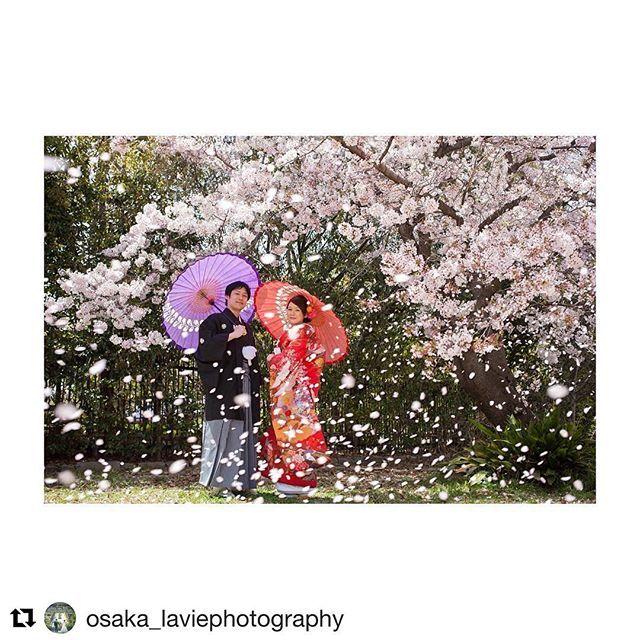 【laviefactory】さんのInstagramをピンしています。 《春の撮影をご検討の方 必見です! #Repost @osaka_laviephotography with @repostapp ・・・ 桜吹雪..* 2/5 ・ 3/5 2days 大阪フェア開催 桜・新緑の時期に撮影をご検討のお客様へ、大変お得な大阪店限定プランをご用意! さらに即決のお客様にはご新婦様衣装ランクアップ30,000yen off! 是非この機会にお越しくださいね! ただいま来店ご予約承り中です★ @laviefactory @lavie_osaka_family #photoby_doike #ハートのある写真#生きる写真 #wedding #photo #laviefactory #instawedding #ig_wedding #smile #weddingtbt #結婚式 #スタジオフェア #写真 #カメラマン #ウェディングフォト #ウェディングドレス #花嫁diy #ロケーション前撮り #プレ花嫁 #卒花 #エンゲージメントフォト#写真が好きな人と繋がりた #桜 #春…