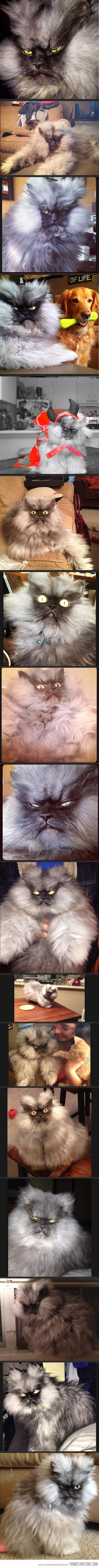 Me as a cat