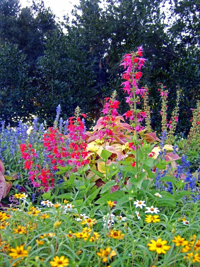 Perennial Garden-there's something simplistically beautiful about this type of garden