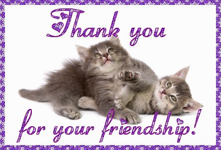 Image result for cat thank you for your friendship