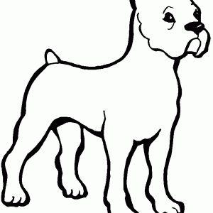 24 best coloriage animaux images on pinterest drinks destinations and places - Dessin chien boxer ...