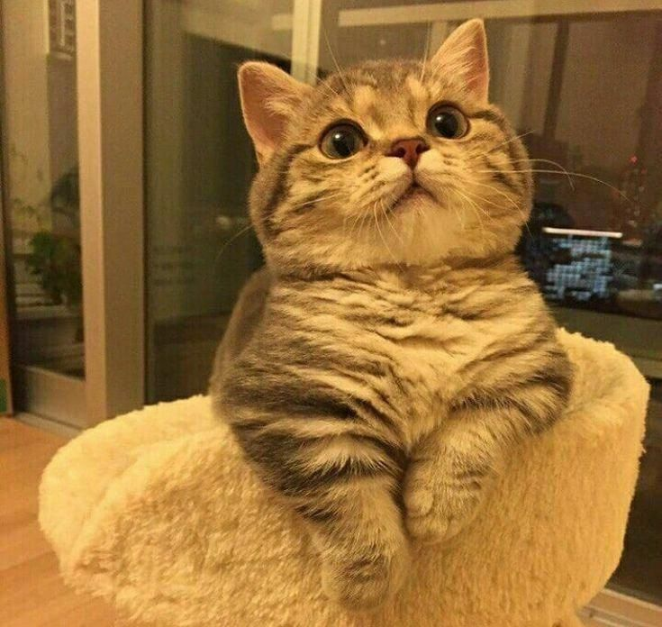 Exceptional Beautiful Cats Information Are Readily Available On Our Website Have A Look And You Will Not Be Sorry You Did In 2020 Pretty Cats Cute Cats Beautiful Cats