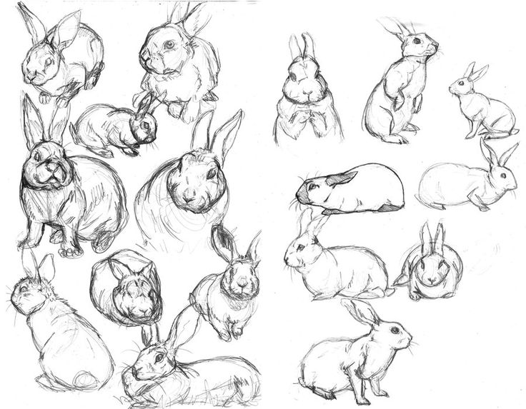 Rabbit sketches by ~fiszike on deviantART